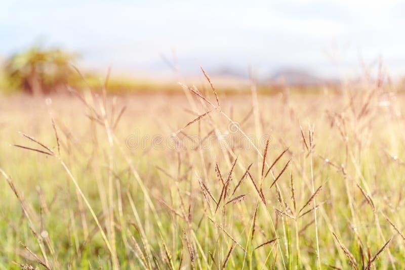 Hierba verde borrosa extracto imagen de archivo