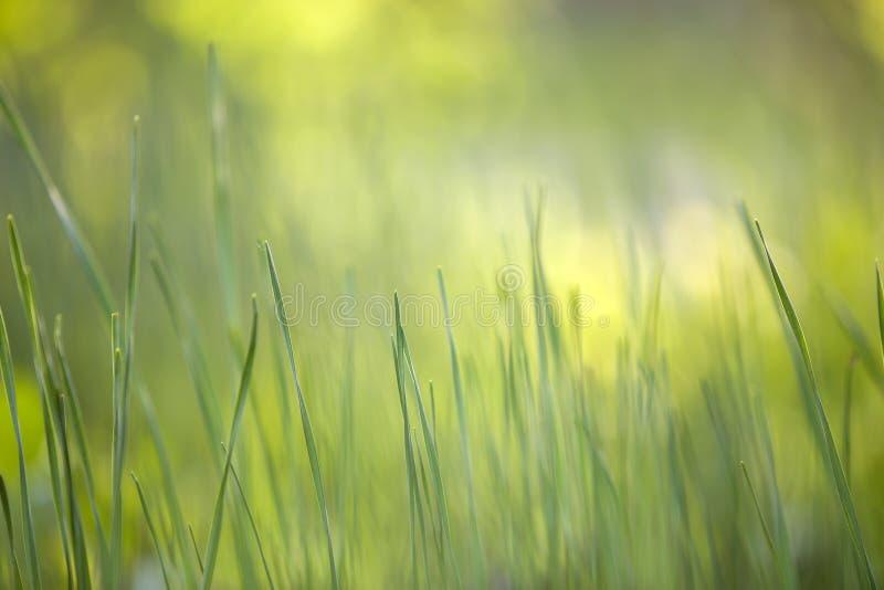 Hierba verde clara, cuchillas finas creciendo en fondo herboso borroso del bokeh verde en d?a soleado de la primavera o de verano fotografía de archivo libre de regalías