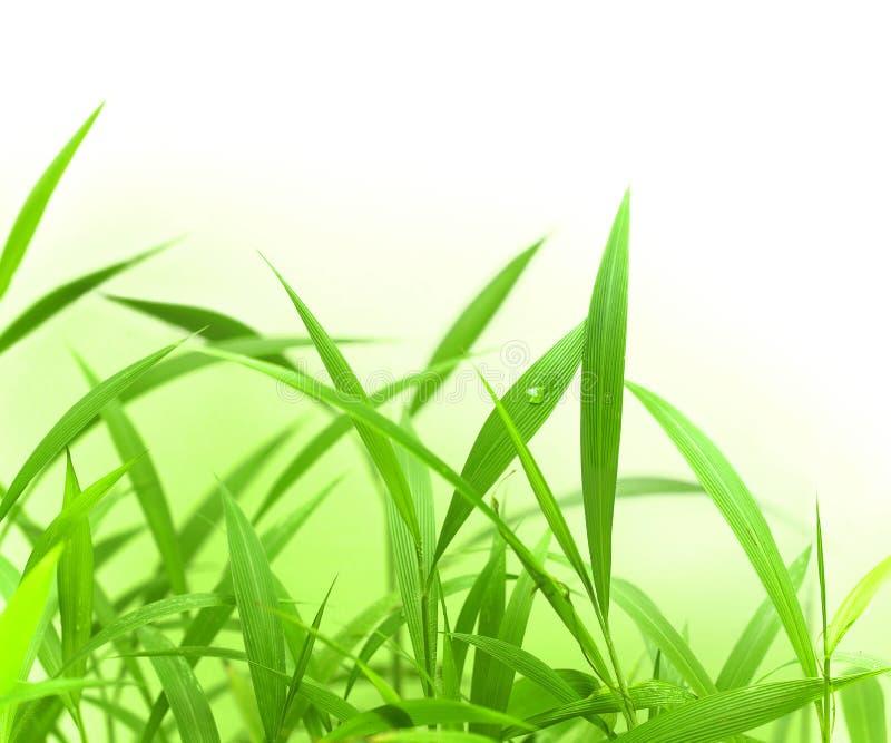 Hierba verde con el espacio para el texto foto de archivo libre de regalías