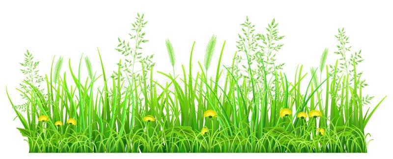 Hierba verde con los dientes de león libre illustration