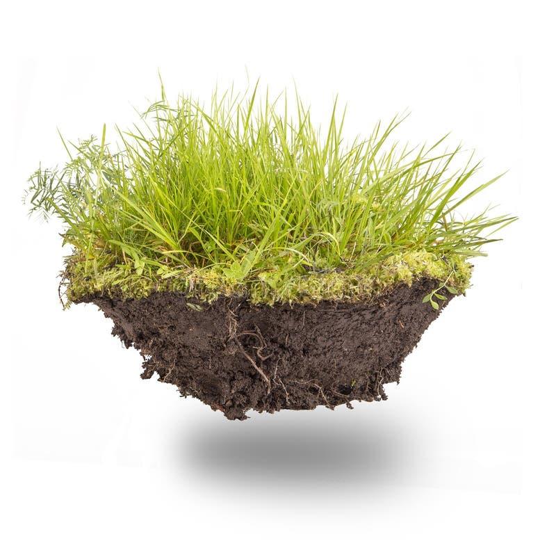 Hierba verde con tierra foto de archivo