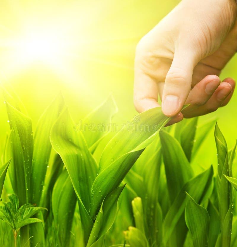 Hierba verde conmovedora de la mano imagen de archivo