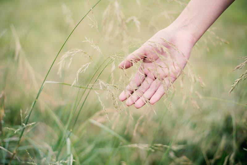 Hierba verde conmovedora de la mano de la mujer en los prados fotos de archivo