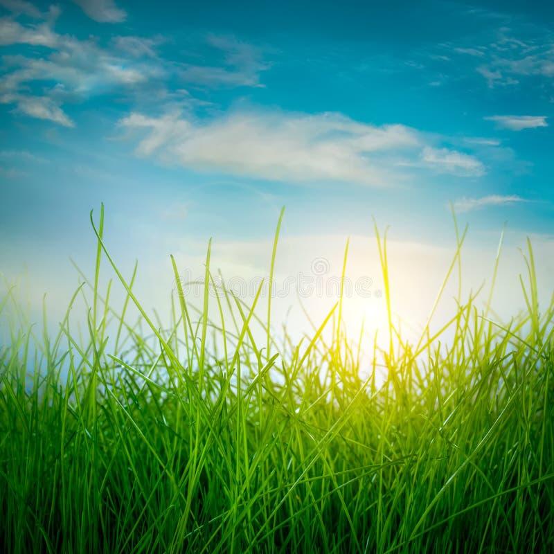Hierba verde de la primavera imágenes de archivo libres de regalías