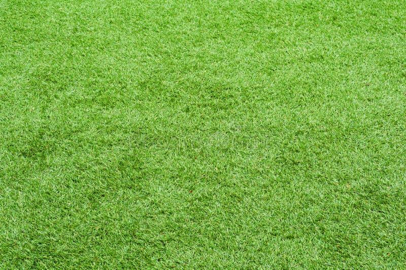 Hierba verde del campo para el uso como fondo de la naturaleza fotografía de archivo libre de regalías