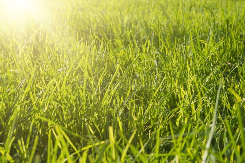 Hierba verde del resorte fresco fotos de archivo