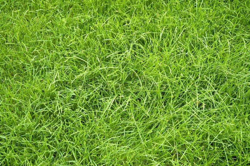 Download Hierba verde del verano imagen de archivo. Imagen de hierba - 193121