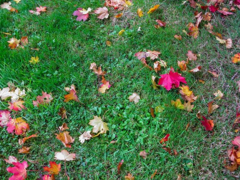 Hierba verde derramada con las hojas de otoño coloridas en el Loira foto de archivo libre de regalías