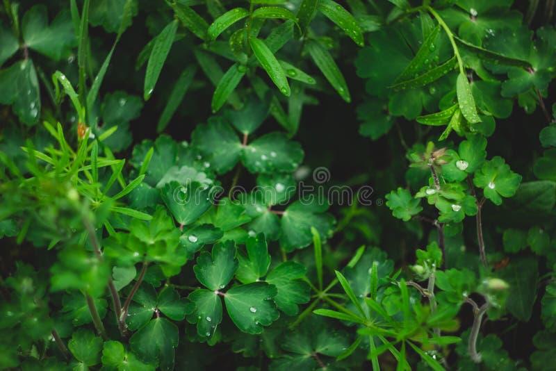 Hierba verde después de la lluvia en verano imagen de archivo libre de regalías