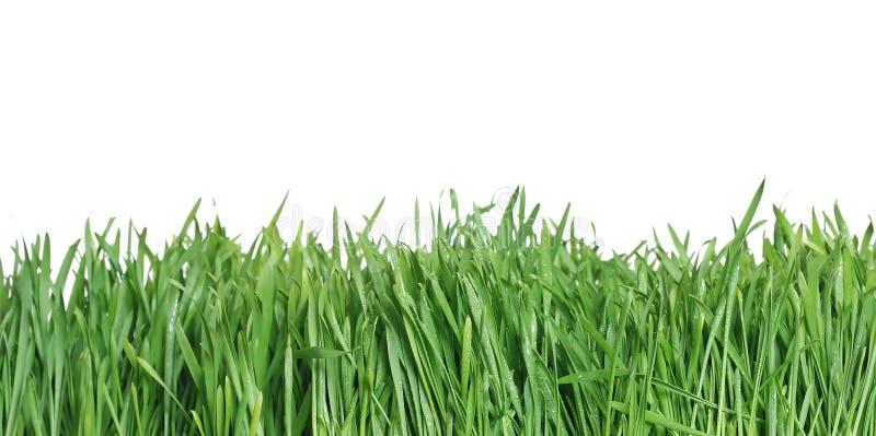 Hierba verde, el backgr de la naturaleza fotografía de archivo