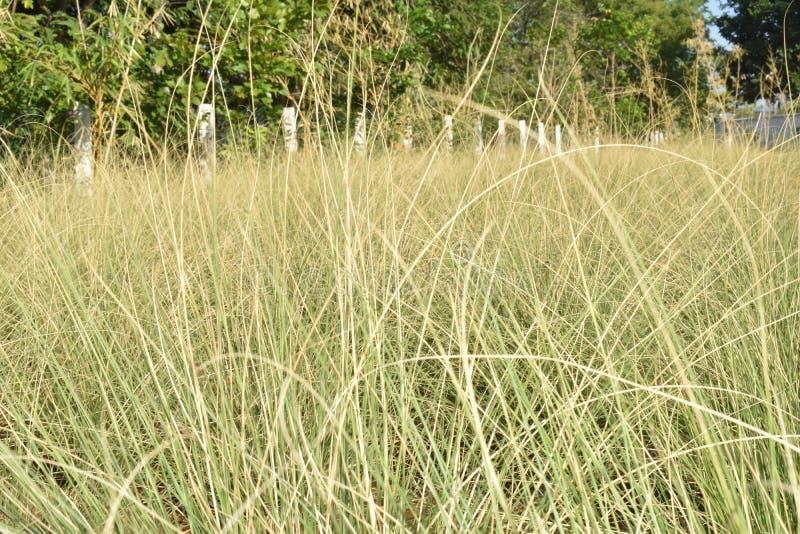 Hierba verde en el bosque imagen de archivo libre de regalías