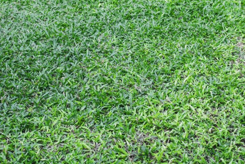 Hierba verde en el jardín, sintiéndose bien caminar en él foto de archivo
