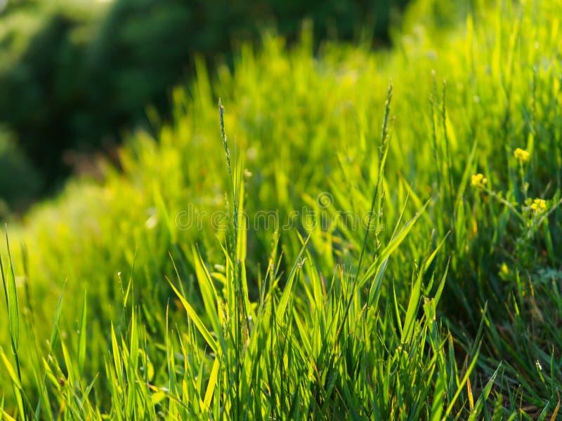 Hierba verde en fondo verde foto de archivo