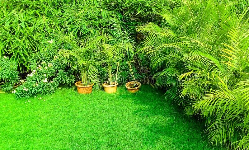 Hierba verde en jardín fotos de archivo