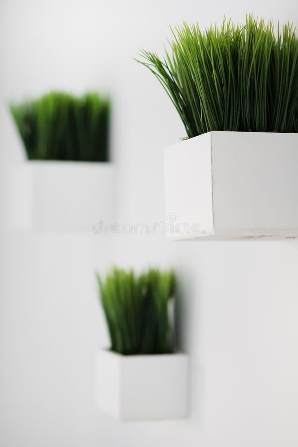 Hierba verde en los potes blancos sobre blanco foto de archivo