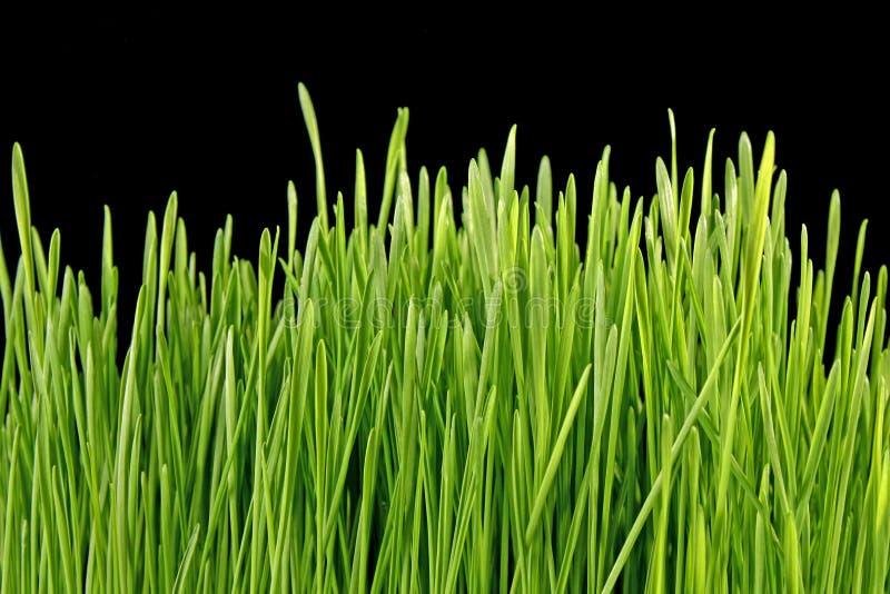 Hierba verde en negro imagen de archivo libre de regalías