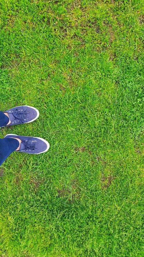Hierba verde en un campo de fútbol foto de archivo libre de regalías