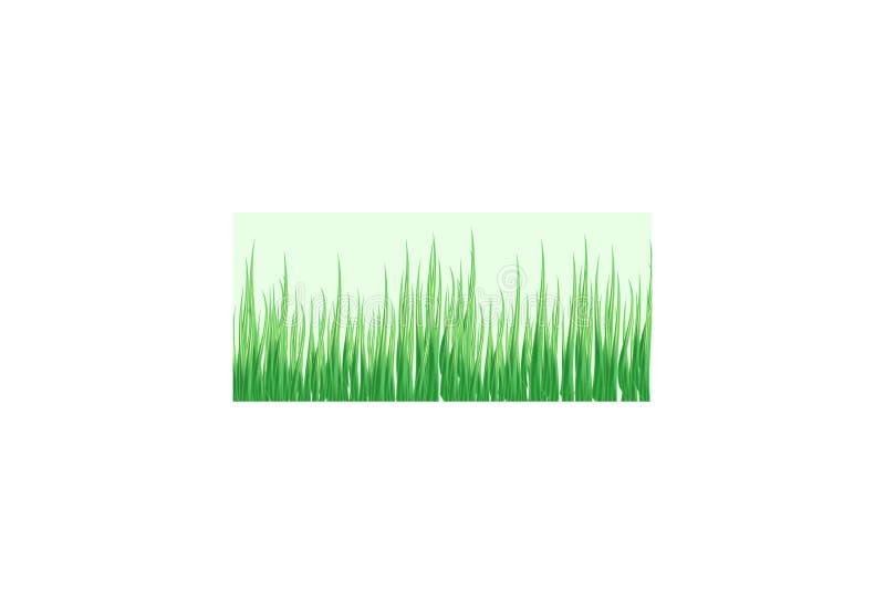 Hierba verde en un fondo transparente claro en la hierba del bosque Manzanillas en el claro libre illustration