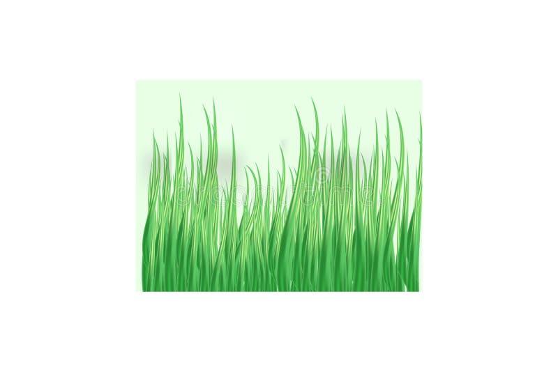 Hierba verde en un fondo transparente claro en la hierba del bosque Manzanillas en el claro stock de ilustración