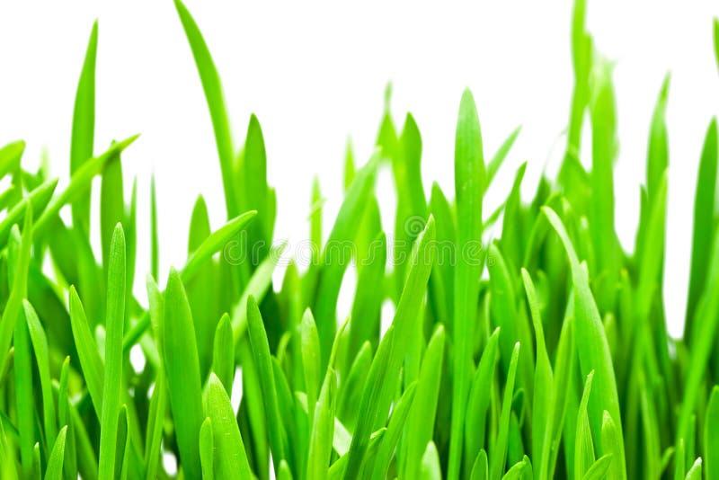 Hierba verde fresca fotos de archivo