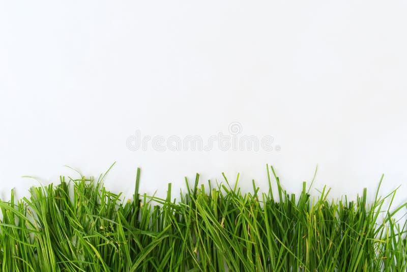 Hierba verde fresca aislada en el fondo blanco para la frontera o el marco imagen de archivo