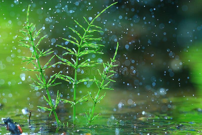 Hierba verde fresca con rocío fotos de archivo