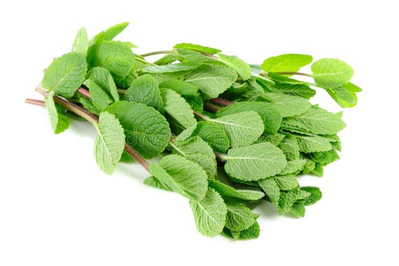 Hierba verde fresca de la menta en el fondo blanco foto de archivo