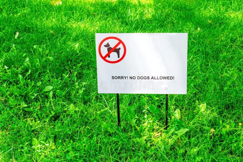 Hierba verde fresca en el césped ¡Placa con la inscripción triste! Ningunos perros permitidos imágenes de archivo libres de regalías