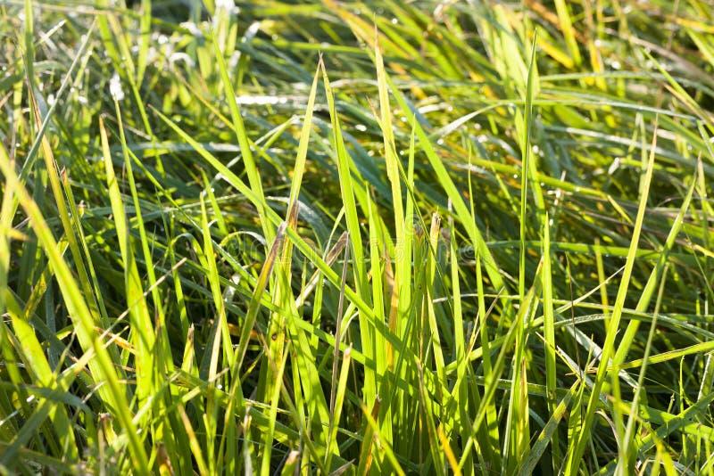 Hierba verde hermosa fotografía de archivo libre de regalías