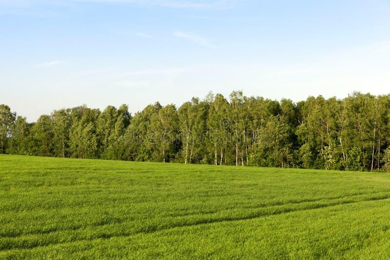 Hierba verde hermosa fotografía de archivo