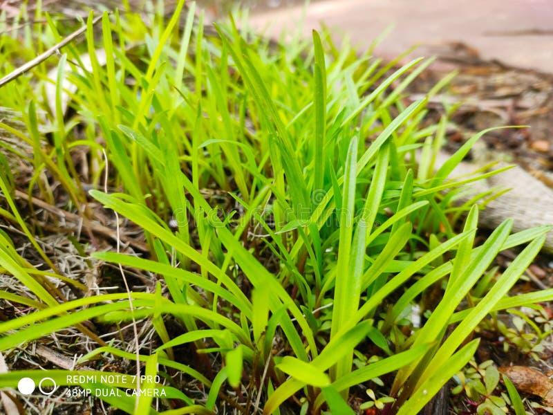 Hierba verde hermosa imagen de archivo libre de regalías