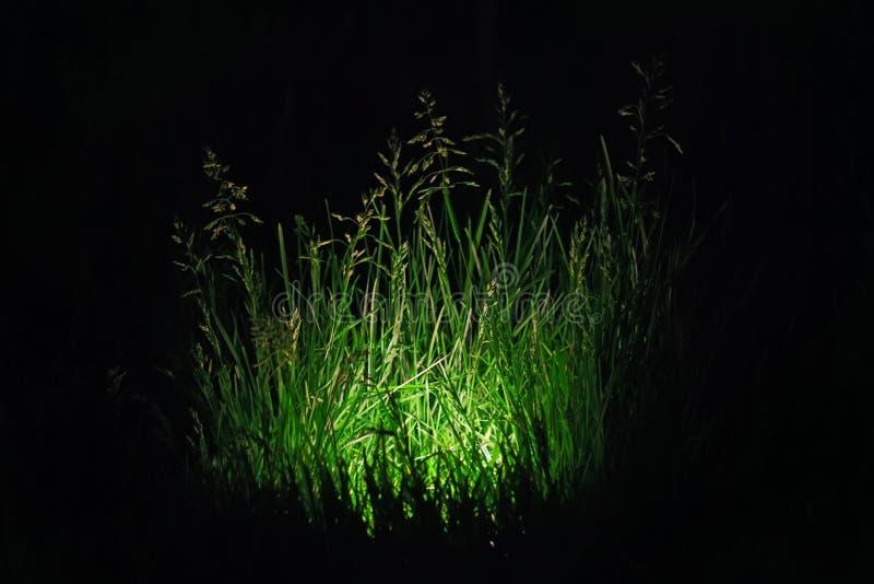 Hierba verde iluminada en oscuridad foto de archivo