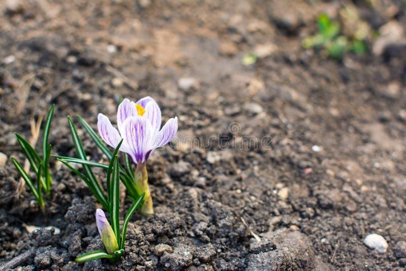 Hierba verde joven D?a de Sun El despertar de la naturaleza foto de archivo libre de regalías