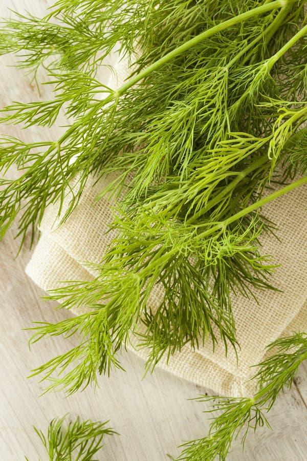 Hierba verde orgánica del eneldo foto de archivo