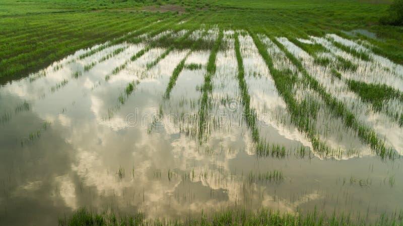 Hierba verde que crece en un área y una reflexión del pantano en la superficie del agua, fondo de la naturaleza fotografía de archivo