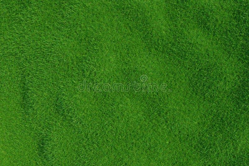 Hierba verde Textura del fondo foto de archivo libre de regalías