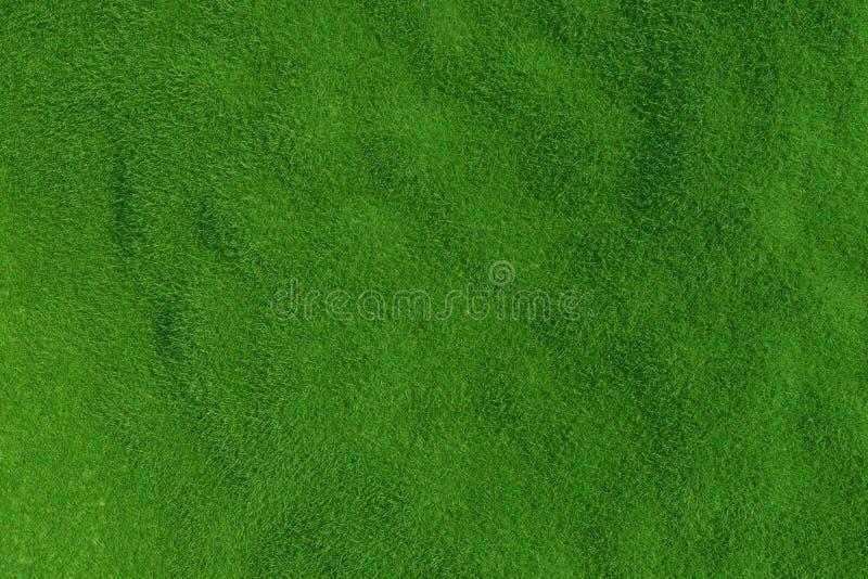 Hierba verde Textura del fondo imagen de archivo