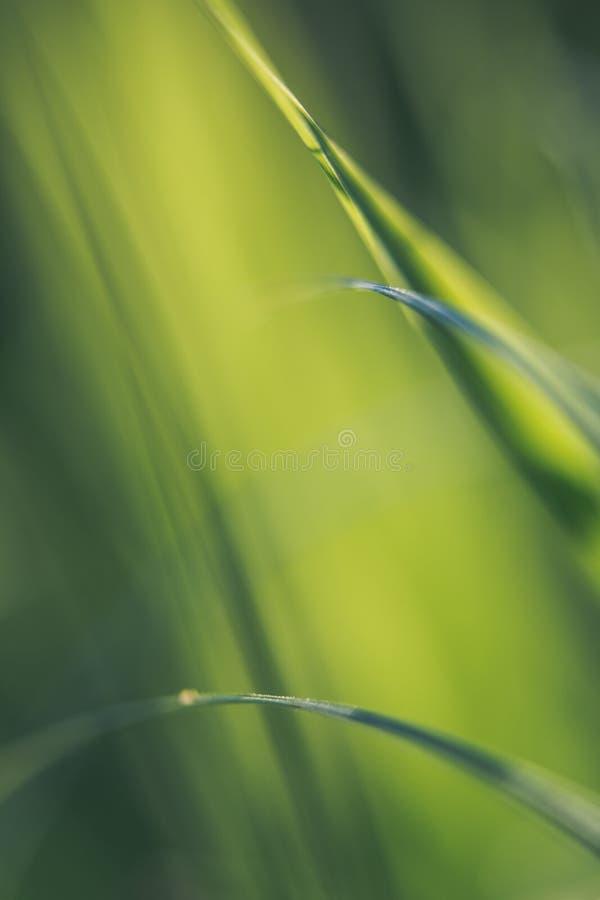 Hierba verde verde, en el piso más forrest, brillando en el sol del verano foto de archivo