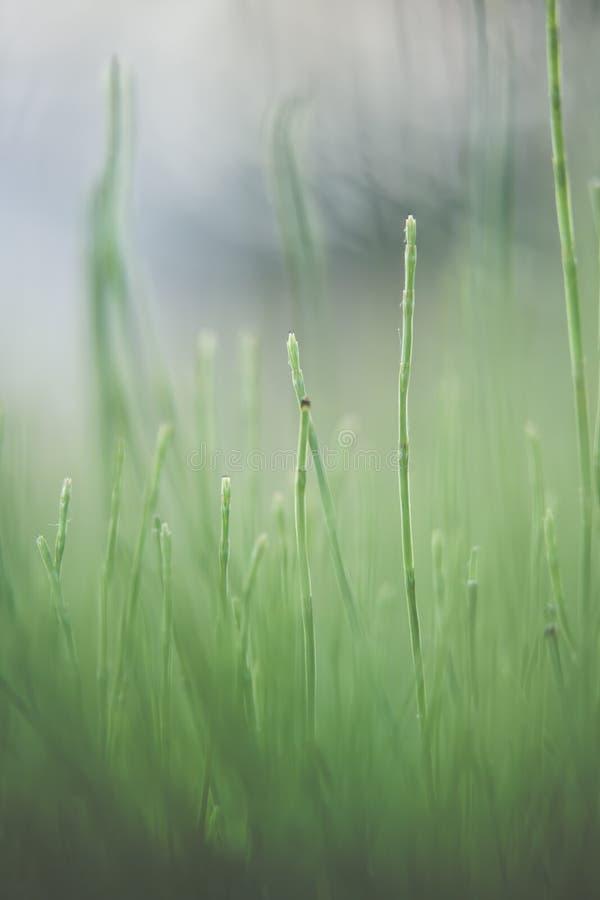 Hierba verde verde, en el piso más forrest, brillando en el sol del verano imagen de archivo