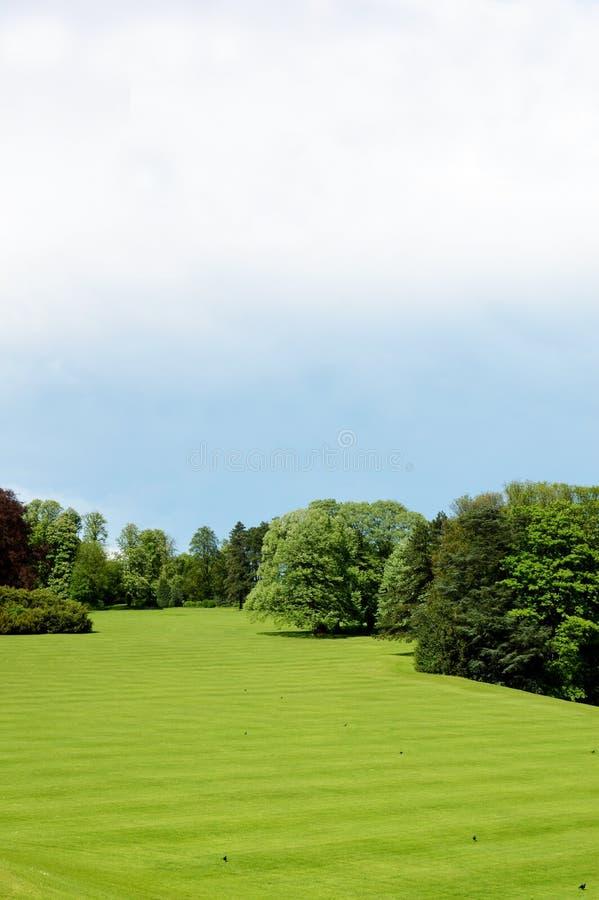 Hierba verde y árboles foto de archivo
