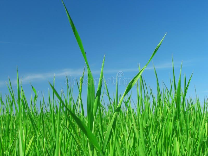 Hierba verde y cielo azul. imagenes de archivo