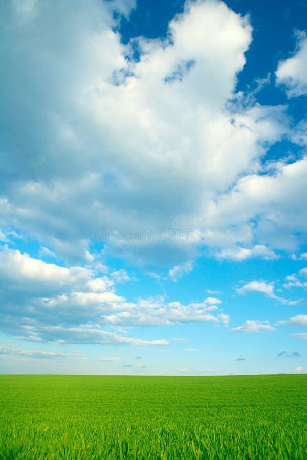 Hierba verde y cielo azul nublado fotos de archivo