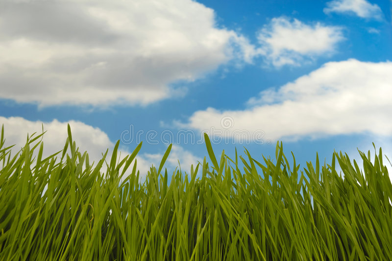 Hierba verde y nubes imagen de archivo