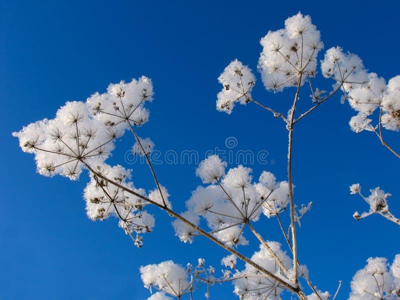 Download Hierba Vestida En El Sobretodo De La Nieve Imagen de archivo - Imagen de nieve, nevadas: 7284307