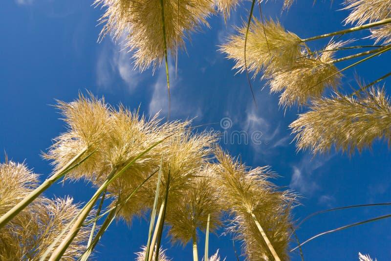 Hierba y cielo altos foto de archivo