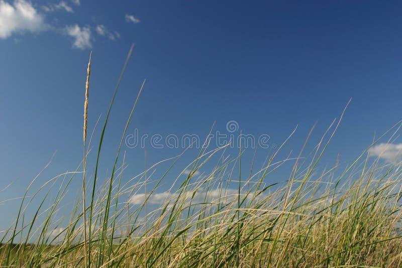 Hierba y cielo del mar imagenes de archivo