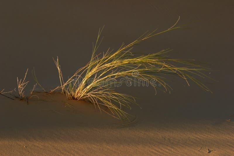 Hierba y duna imagen de archivo
