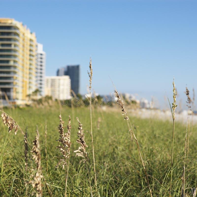 Hierba y edificios de la playa imágenes de archivo libres de regalías