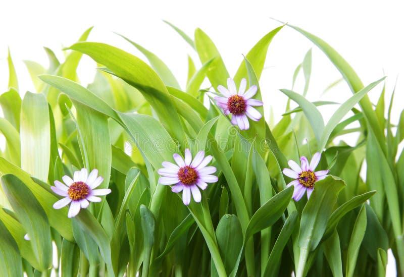 Hierba y flores foto de archivo
