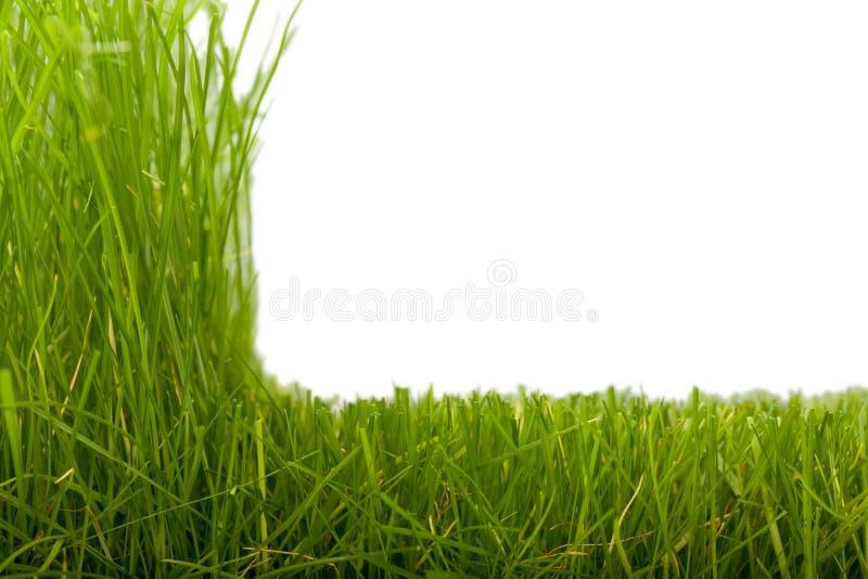 Hierba y hierba cortada imagenes de archivo